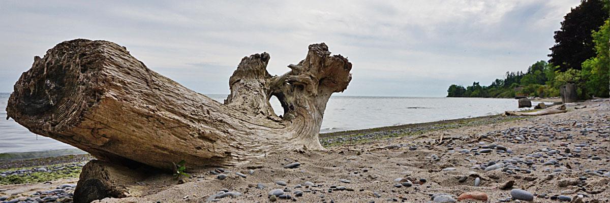 Naturstrand-am-Lake-Ontario-bei-Ajax