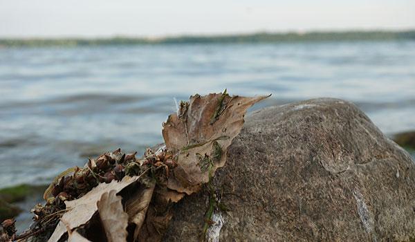 Findling-mit-Blättern-am-Ontario-Seeimmt-einen-Zug-aus-der-Flasche